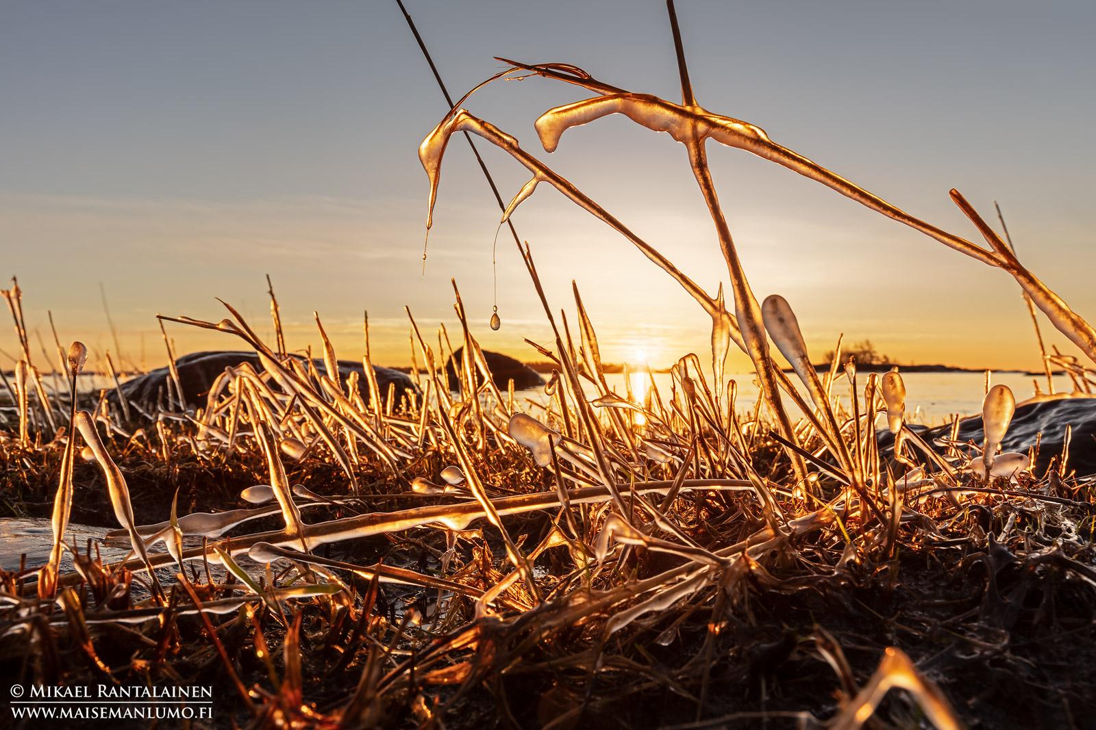 Jäätyneitä korsia, Lauttasaari