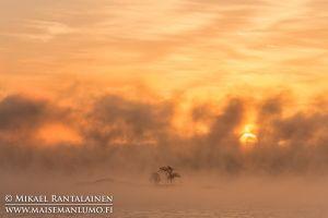Merisavua auringonnousun aikaan, Kallahdenniemi, Helsinki (HT212)