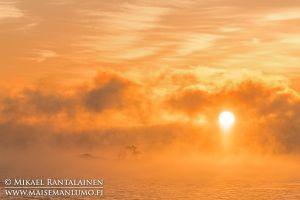 Merisavua auringonnousun aikaan, Kallahdenniemi, Helsinki (HT213)